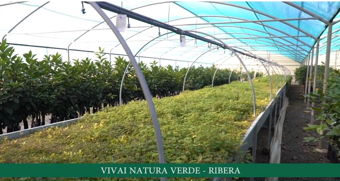 Vivaio Forestale Sicilia : Vivai natura verde a ribera un vivaio siciliano certificato ialmo