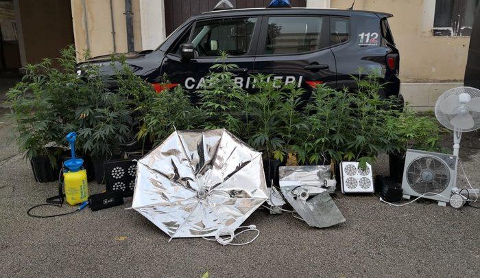coltivazione marijuana - santa croce camerina
