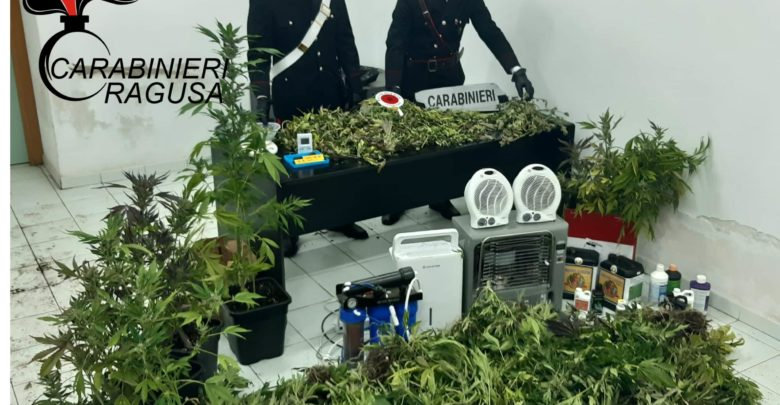 Comiso, piantagione di marijuana in una serra