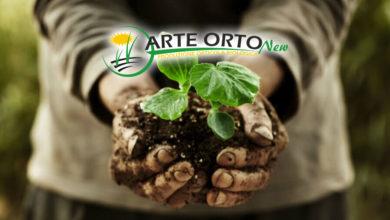ragusa - bio - arte orto new