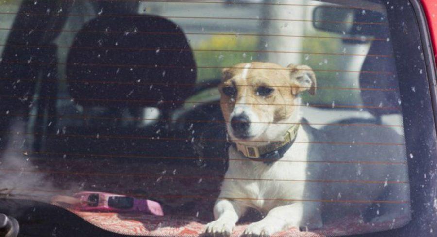 cane - auto - denunciato