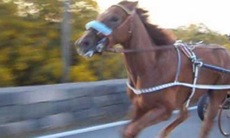 corse cavalli catania