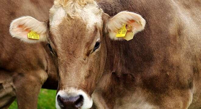 movimentazione bovini - Ragusa