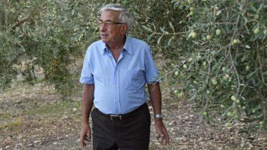 olio - raccolta olive